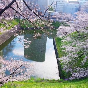 桜行脚―千鳥ヶ淵、靖国神社、新宿御苑