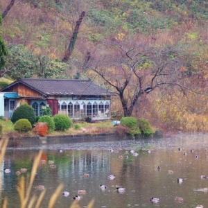 鶴岡市大山の下池