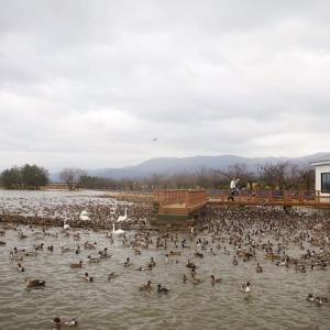 久しぶりの瓢湖