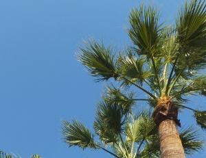 椰子の木は天国と地獄