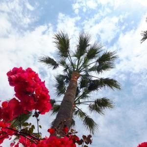 さっぱり、椰子の木