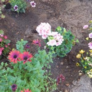 花を買う季節