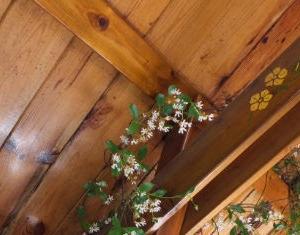 ジャスミンの天井