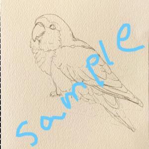 【特別企画】鳥さんぬりえコンテスト開催