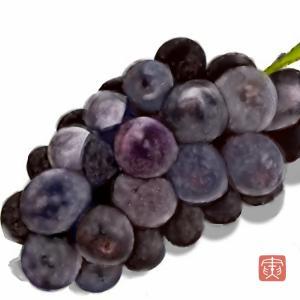 果物画 「葡萄」