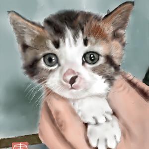 動物画 「可愛い子猫」
