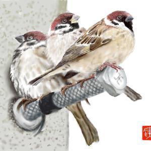 動物画 「三羽のスズメ」