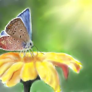 昆虫画 「マリンゴールドに蝶」
