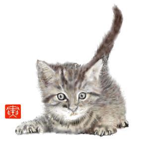 動物園 「癒しの子猫」17
