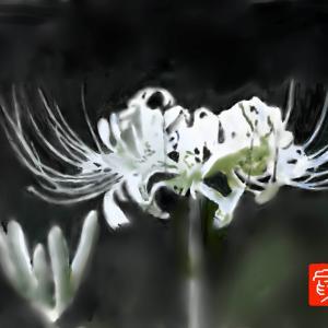 癒しの花 「彼岸花」