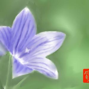 癒しの花 「桔梗」