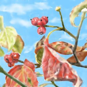 秋の木の実 「花水木」
