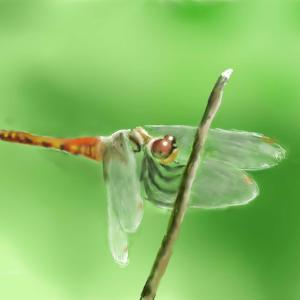 秋の昆虫 「赤とんぼ」