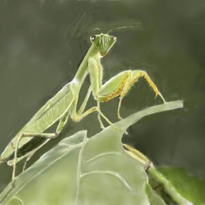 秋の昆虫 「カマキリ」