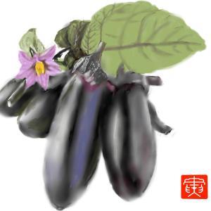 野菜 「秋茄子」