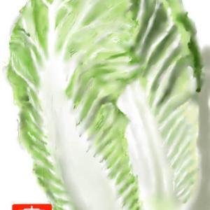 野菜 「白菜」