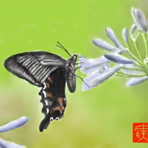 花と蝶 「クロアゲハチョウ」