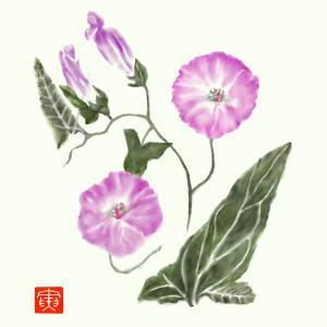 道端の草花 「コヒルガオ」