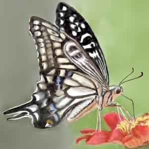 昆虫画 「ナミアゲハに魅了されて」1
