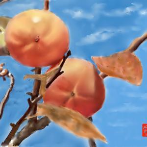 秋の味覚 「柿」