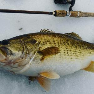 冬って実際どうなんでしょう  自分は釣ったこと無い