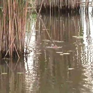 琵琶湖水系のシャローカバーではもう普通に釣れとるぞ本湖は釣れてないが