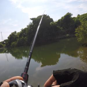 淀川釣れんよなあ