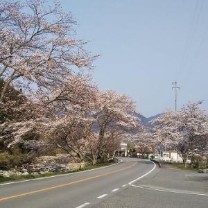 ☆峰山高原ホテル リラクシア☆桜が満開です。♪☆
