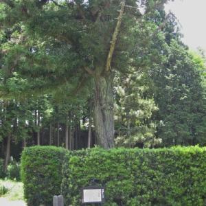 和田公方屋敷跡
