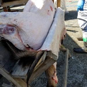 猪の皮むき