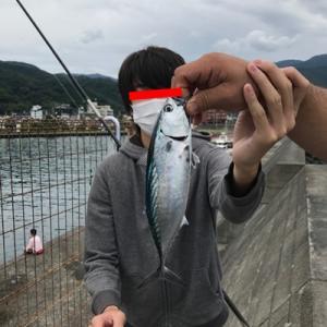 土肥漁港で釣り