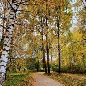 かろうじて、まだ秋。