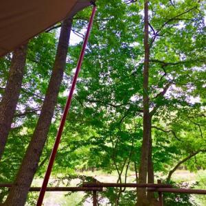 夏キャン△Foresters Village Kobittoへ出撃!濡れたテントを乾かしに。