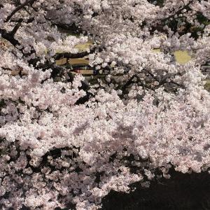 気候が穏やかで花が咲く季節がいい