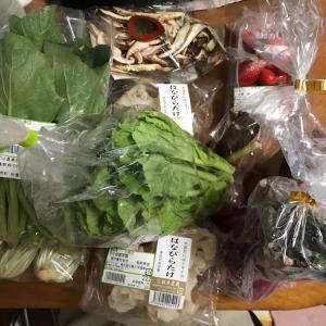 無農薬野菜を買いに