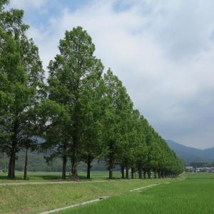 滋賀県の旅