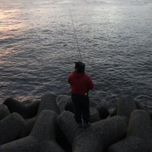 豊浜漁港 サビキでイワシ釣り