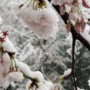 【都心1cm積雪 3月下旬32年ぶり】/志村けん/元英首相「世界政府」を提案
