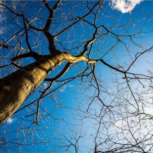 青空と樹♪
