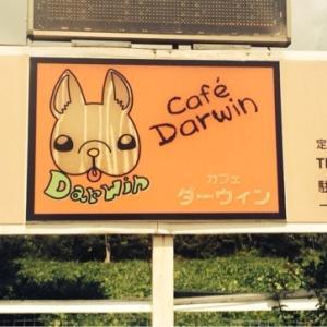 カフェ・ダーウィン