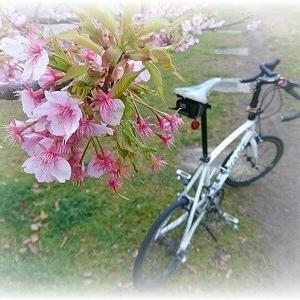 春が待ち遠しい・・・のだが。