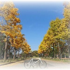 201118 SAKAI MINI-Velo Potter. 青と黄と小径車・・・。