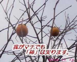 柿が実る・・・