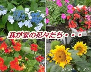 花の美しさは・・・