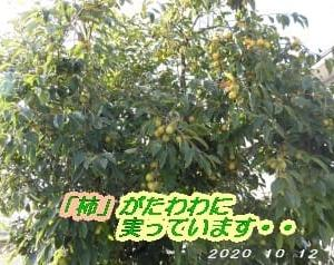 北海道でも「柿」が・・