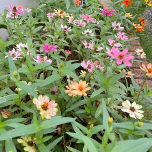 【朝活】夏の終わりの庭仕事