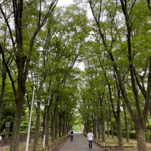【散歩時間】この景色みて〜!