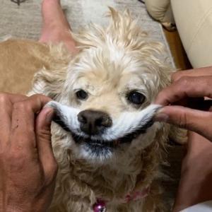 我が家の愛犬 35