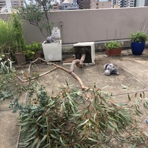思わぬ台風被害