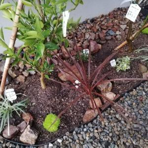 【WEB内覧会】庭を2日間で改良!☆低予算でおしゃれな庭を造る方法